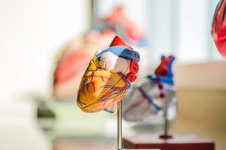Впервые из стволовых клеток удалось создать маленькое человеческое сердце